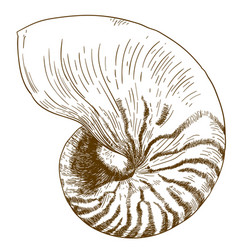 Engraving drawing of nautilus pompilius vector