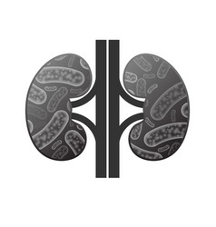 kidneys with bacterium vector image