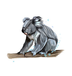 Koala from a splash watercolor colored drawing vector