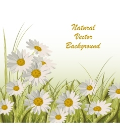 nature background with green grass and daisies vector image