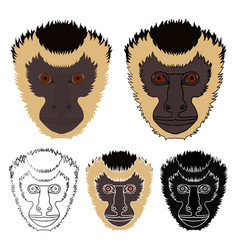 Prego monkey in face view vector