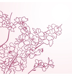 sakura lines vector image