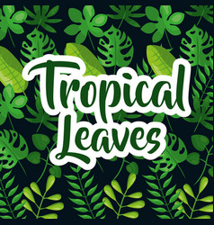 Tropic leaves background with frame for your text vector