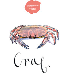 serrated mud crab vector image