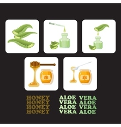 Set icons with pieces of aloe vera and honey vector image vector image