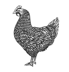 Chicken in engraving style design element for vector