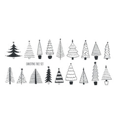 collection various firs pines or spruces drawn vector image