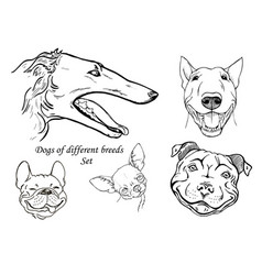 Dogs of different breeds set vector