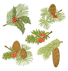evergreen branches with cones and vector image