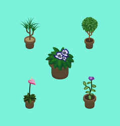 Isometric houseplant set of flower tree grower vector