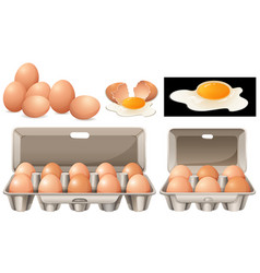 Raw eggs in different packages vector