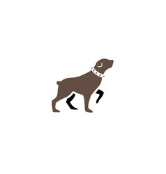 rottweiler dog walking head up and collar vector image