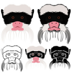 Saguinus imperator monkey in face view vector