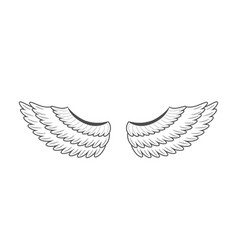 wings on white background vector image