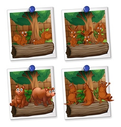 Four picture frames of animals with brown fur vector image