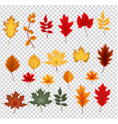 abstract with falling autumn vector image