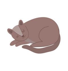brown pet cat feline sleeping character isolated vector image