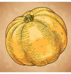 engraving big pumpkin retro vector image