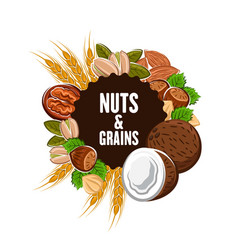 Grains and nuts cereals banner vector
