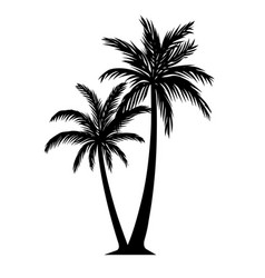 palm tree silhouette detail black and white vector image