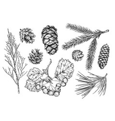 Set of hand drawn plants vector