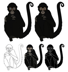 Spider monkey in front view vector