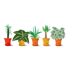 five pots with plants vector image