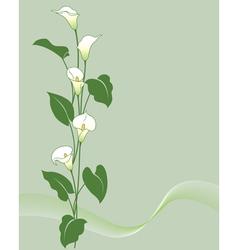 Calla bouquet vector image