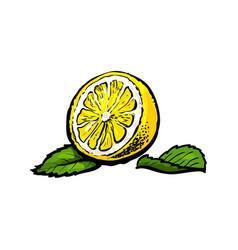 Sketch half of ripe lemon with leaves vector