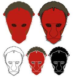 White uakari monkey in face view vector
