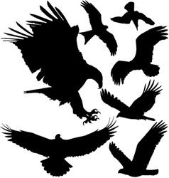 Birds of prey silhouettes vector image vector image