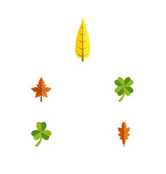 Flat icon foliage set of linden alder leafage vector