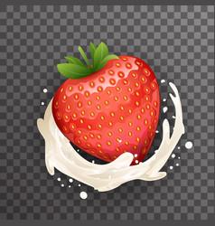 milk cream curl splash drops fruit strawberry vector image