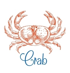 Red ocean crab with big pincers sketch icon vector image