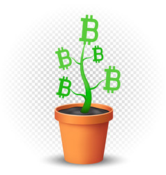 bitcoin plant grows in flowerpot vector image vector image
