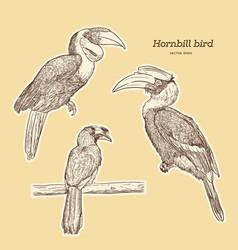 hornbill hand draw sketch vector image