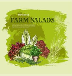 Salad leaf and green vegetable sketch poster vector