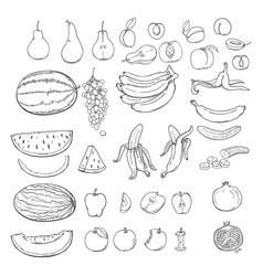 set sketch fruits vector image