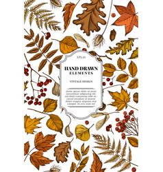 Card design with colored rowan rowan acorn vector