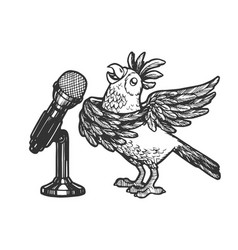 cartoon singing parrot sketch engraving vector image