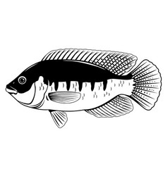 Tilapia fish black and white vector