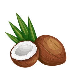 Whole coconut and half vector