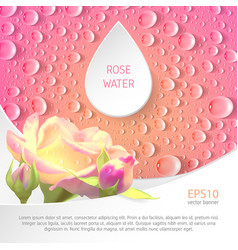banner for rose watter vector image