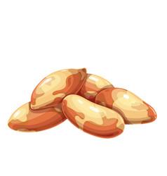 Brazil nuts icon vector