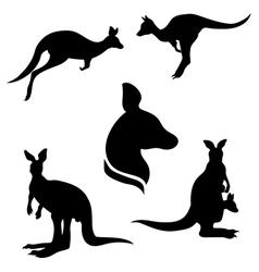 kangarooSet vector image
