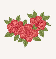 red hibiscus flowers and leaves hand drawn vector image