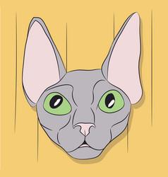 cat lies in the room vector image