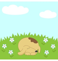 Dog sleeping on the meadow vector image