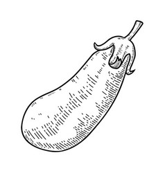 eggplant in engraving style design element vector image