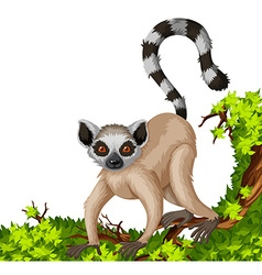 Lemur on the branch vector